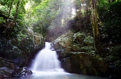 BOrneo Rainforest Waterfall