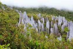 Borneo pinnacles gunung mulu national park